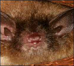 Punta Gorda bat removal