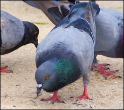 Punta Gorda bird control