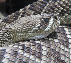 Punta Gorda snake removal