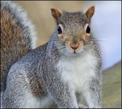 Punta Gorda squirrel removal